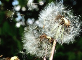 Глазные аллергии