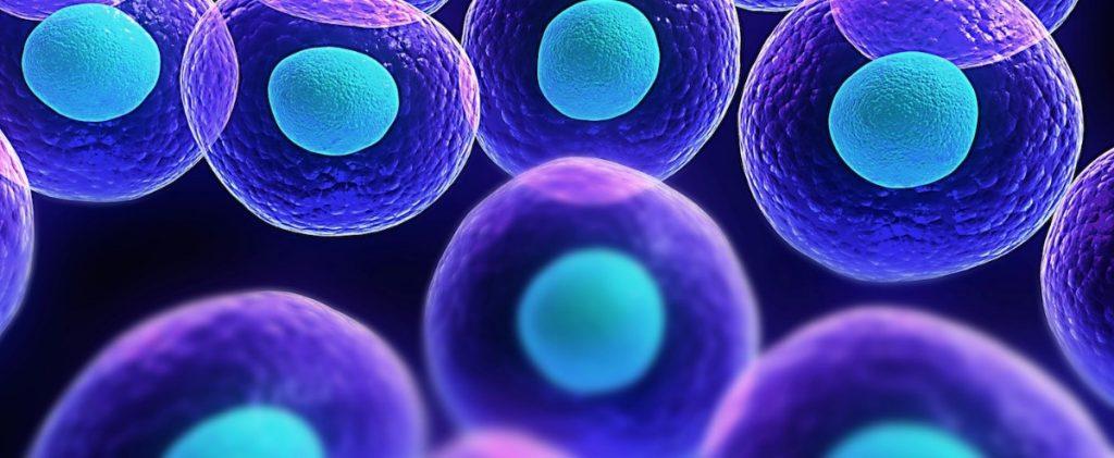 Image de cellules souches