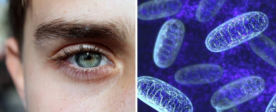 نشر الوعي عن مرض أعتلال ليبر العصبي الوراثي البصري الذي يصيب فئة الشباب مسبباً العمى