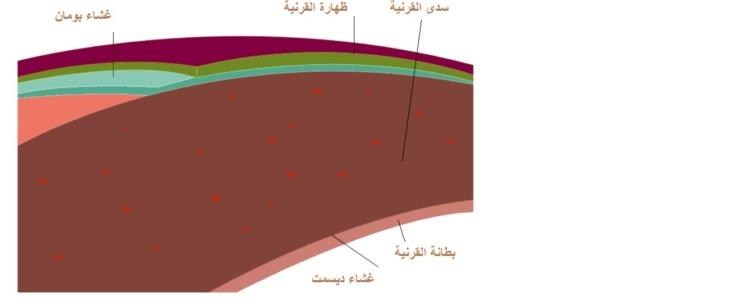 92713594f أمراض ومشاكل العيون | ICR