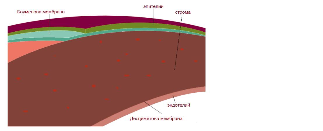 Дистрофии роговицы
