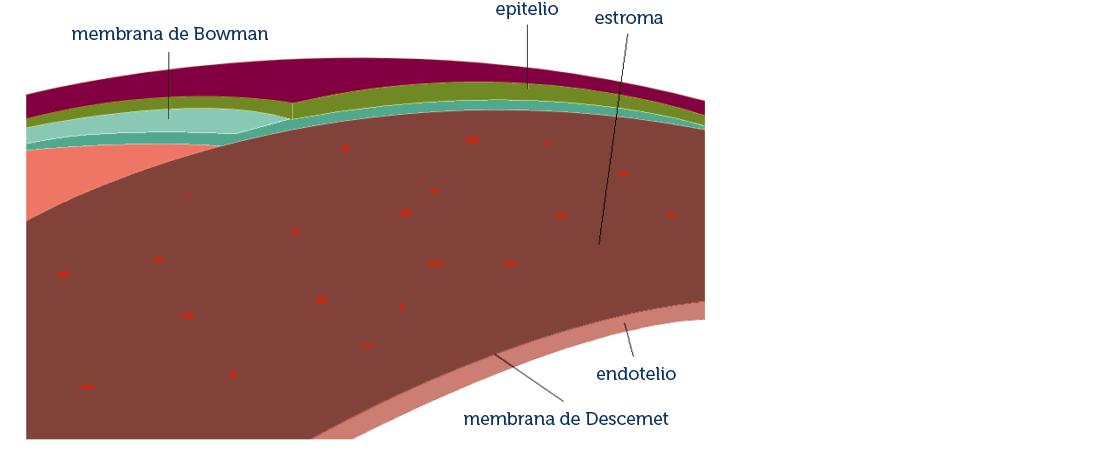 Distrofias corneales