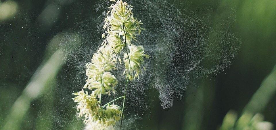 alergia primaveral y coronavirus